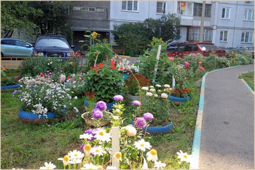 Какие цветы сажают во дворе 81